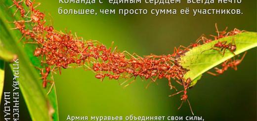 Листья и муравьи. Муравьи строят мост.