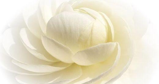 Ум Цветок