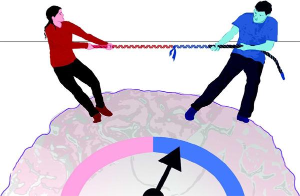 Согласно новой гипотезе, причины многих психических заболеваний кроются в своеобразном «перетягивании каната», в которое вовлечены в человеческом организме гены, унаследованные от отца и матери.