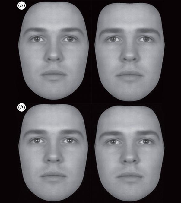 Рис. 2. Вверху: (a) феминизированный (слева) и маскулинизированный (справа) варианты мужского лица. Внизу: (b) симметричный (слева) и ассиметричный (справа) варианты мужского лица. Такие пары изображений и показывали участникам эксперимента.