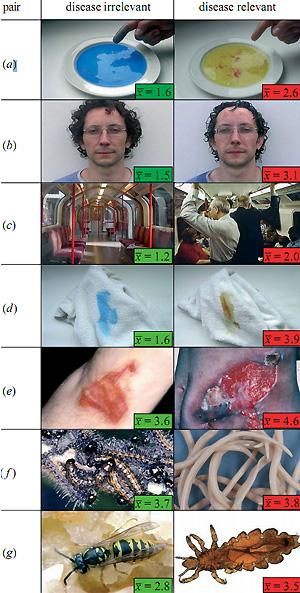 Рис. 3. Пары изображений, ассоциирующихся (справа) и не ассоциирующихся (слева) с болезнями и паразитами. Цифры — это средний балл, характеризующий степень отвращения, возникающего при разглядывании данной картинки.