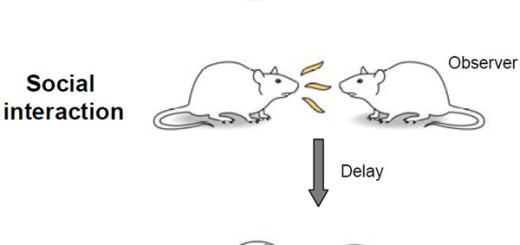 neirony2